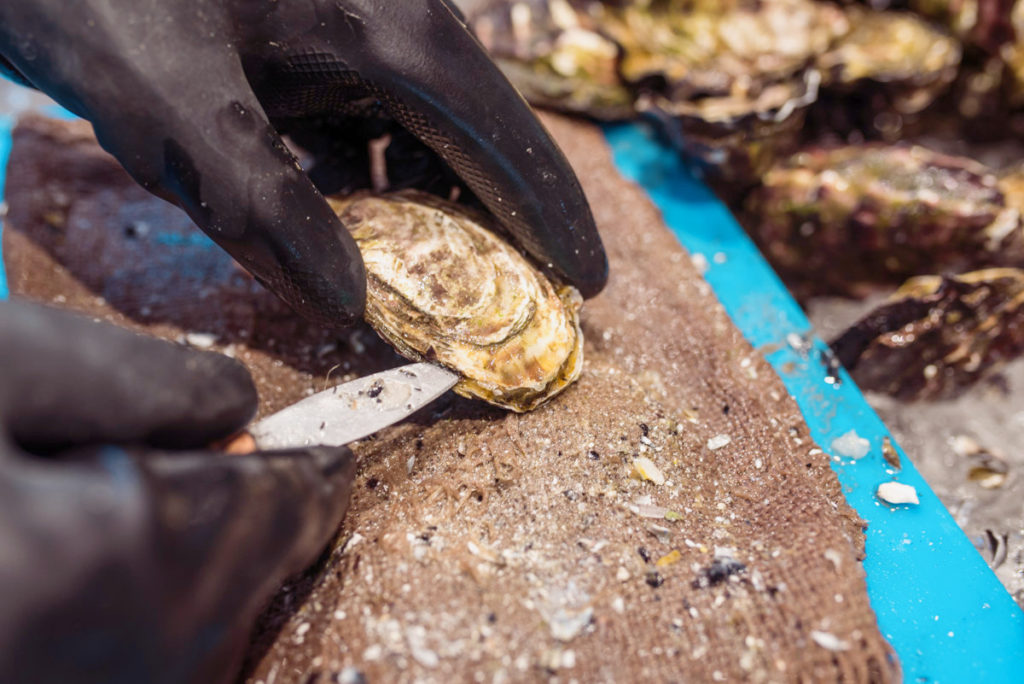 Shucking Oyster